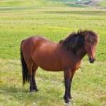 Farmer sleek bay horse — Stock Photo #73039889