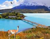 Island with hotel and lovely guanaco on the hill — Stock Photo