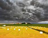 Big field with haystacks — Stock Photo