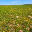 Flat carpet of wild flowers — Stock Photo #77635319