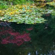 In pond reflected flowers — Stock Photo #78193324