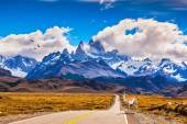 On the road is  graceful guanaco — Stock Photo