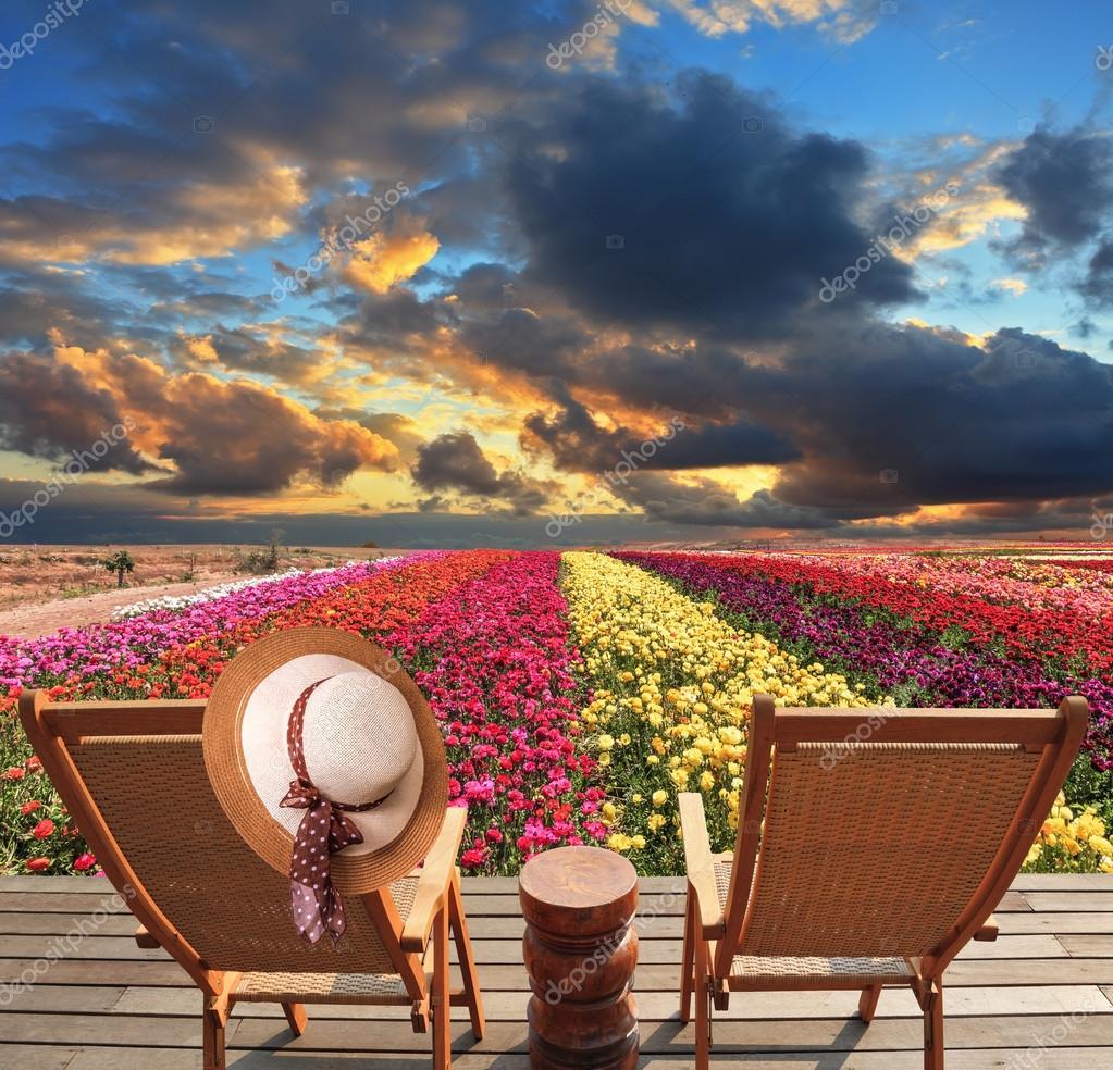 Sedie a sdraio sul campo di fiori — Foto Stock © kavramm #95365224