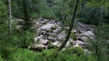 Belokurikha mountain river in Altai Krai. Russia. — Stock Video