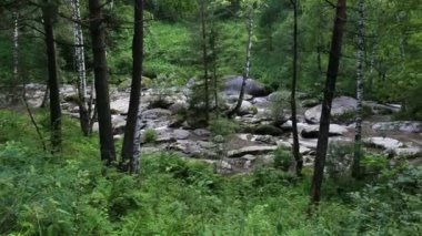 Panorama of Belokurikha mountain river in Altai Krai. Russia. — Stock Video