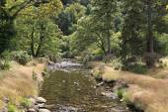 Vegetation on the banks of creek. — Stock Photo