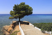 Beautiful summer view of a lone pine and the Aegean Sea. — Stock Photo