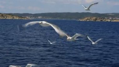 Seagulls flying over the sea. Northern Greece. — ストックビデオ