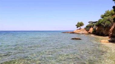 Pine on stone ledge. Sithonia peninsula. Northern Greece. — Stock Video