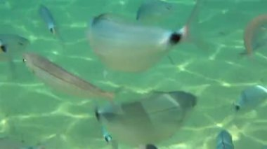 School of fish in the Aegean Sea. — Stock Video
