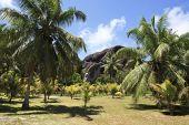 Beautiful enormous black granite rocks in a palm grove — Stock Photo