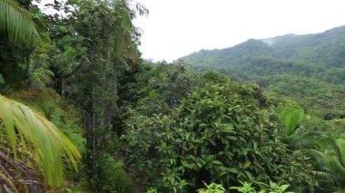Панорама природного заповедника Vallee de Mai — Стоковое видео