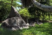 Black granite rocks in the thickets of tropical vegetation. — Stock Photo