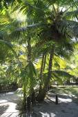 Beautiful palm trees on the coast of Anse Lazio. — Stock Photo