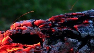 Beautiful log smoldering in fire. — Stock Video