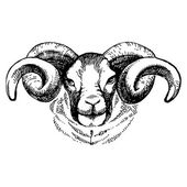 Hand drawn sketch portrait of sheep — Stock Vector