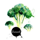 Broccoli. Hand drawn watercolor painting on white background — Stock Vector