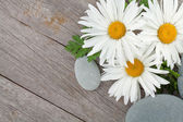 Camomile flowers and stones — Stock Photo
