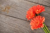 Orange gerbera flowers — Stock Photo