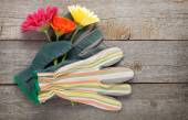 Gardening gloves and gerbera flowers — Stock Photo