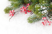 Branch with holly berry — Stock Photo