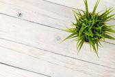 Potted grass flower — Foto de Stock