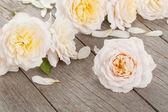 Fresh rose flowers — Stock Photo