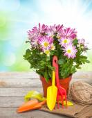Potted flower and garden tools — Stock Photo