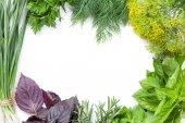 Fresh garden herbs — Stock Photo