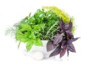 Fresh garden herbs in mortar — Stock Photo