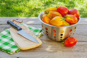 Fresh ripe tomatoes — Stock Photo