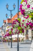 Flowers  on street lamps — Stock Photo