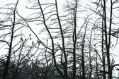 Trees silhouette with birds — Stock Photo