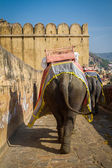 Elephants in the Amber Fort — Stock Photo