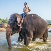 Temple elephant and  keeper — Stock Photo