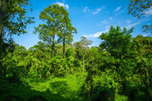 Lush green tropical forest — Stock Photo