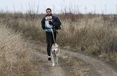 ездовых собак — Стоковое фото