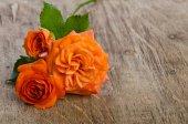 Růže na dřevěné pozadí — Stock fotografie
