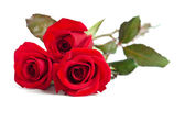Beautiful three red roses isolated on white background — Stock Photo