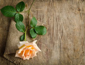 Delicate cream rose on wooden table with sacking — Stock Photo