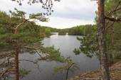 View of the forest lake. — Stockfoto