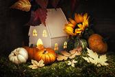 秋の組成 — Stock fotografie