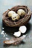Bıldırcın yumurta bir yuvaya — Stok fotoğraf
