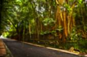 Beautiful blurred tropical view in defocus. Landscape photo with empty road. — Stock Photo