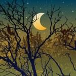 Forest illustration for halloween — Stock Vector #59494529