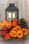 Fall flowers — Stock Photo