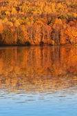 Fall trees in New Brunswick Canada — Stock Photo