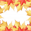 Fall leaves border — Stock Photo #55555253