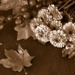 Fall flowers in sepia — Stock Photo #55555307