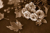 Fall flowers in sepia — Stock Photo